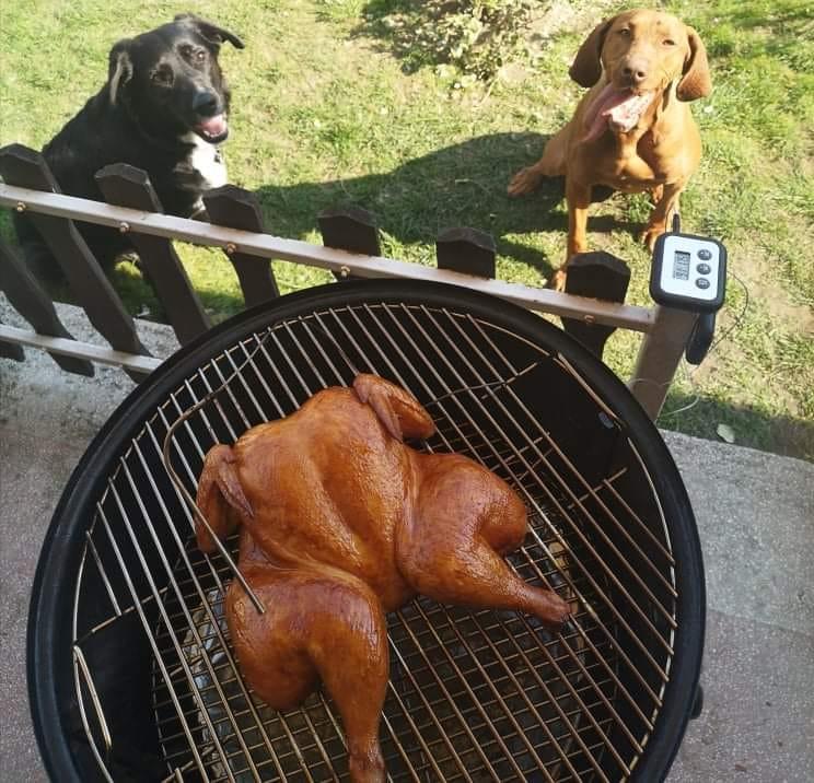 Kiterített csirke